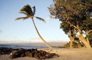Beach scene on the island of Oahu, Hawaii