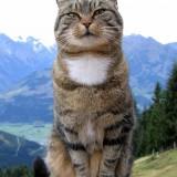 cat-369205_640