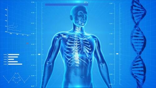 human-radiography