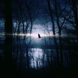 forest-mystery-strange