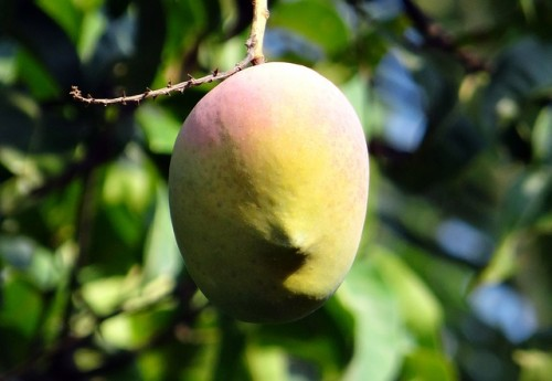 Most Expensive Fruits In The World