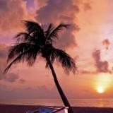 palm-tree-166738_640