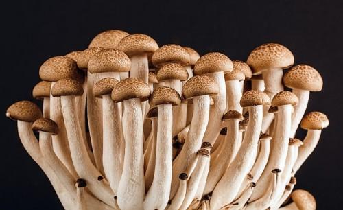 mushroom-389421_640