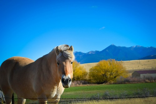 montana-horse - landscape-farm-mountain-rural