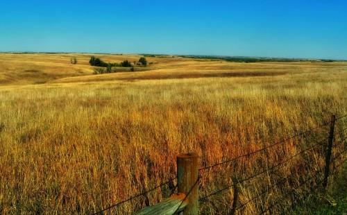 nebraska-plains -plants-rural-countryside