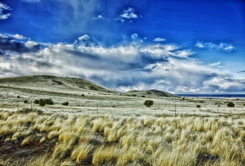 new-mexico-plants, landscape, rural, countryside