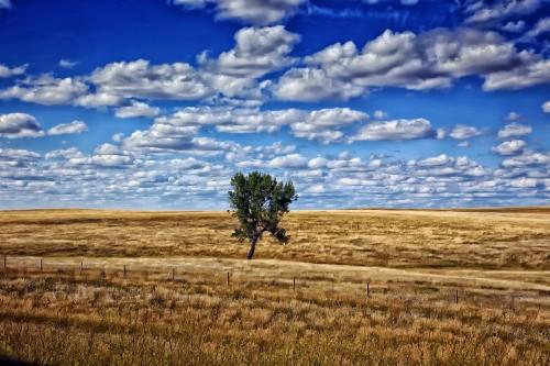 south-dakota countryside, tree, sky, landscape, nature, rural