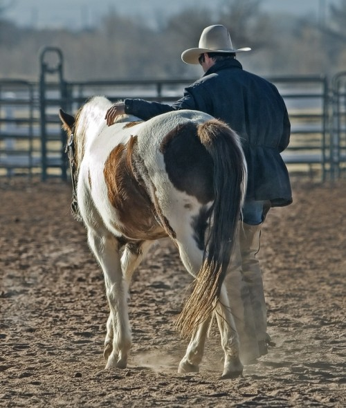 cowboy-419083_1280
