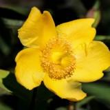 flower-188418_1280