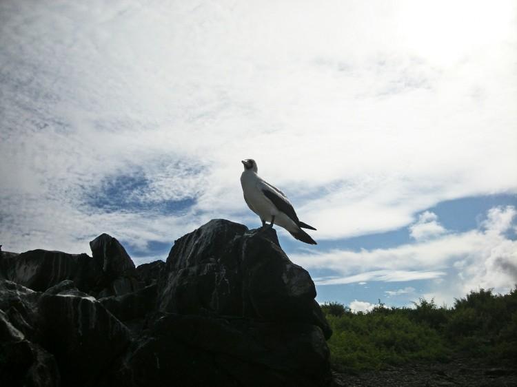 bird-18233_1280