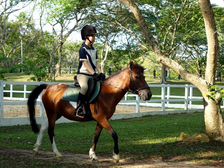 horse-397954_1920