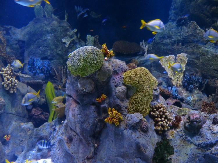 reef-452882_1280