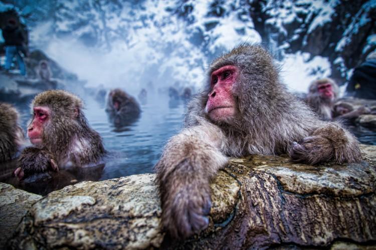 Kiyoshi Hijiki/Shutterstock.com