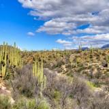 tucson, arizona, cactus, desert, usa, state, park, cholla, mountains, southwest, sonoran, vegetation, wilderness