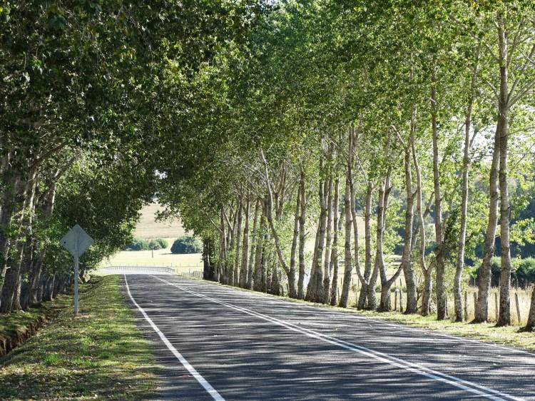trees-744513_1280
