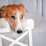 Ksenia Raykova/Shutterstock.com
