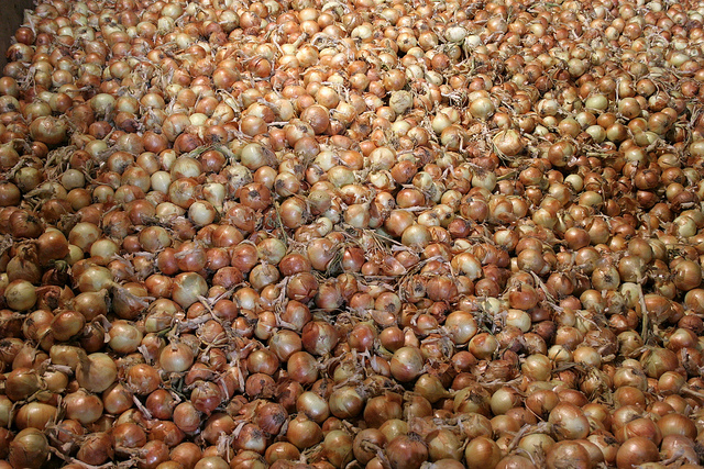 Onion Food Agriculture Farming