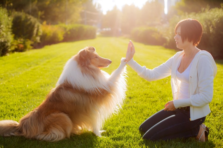 Most Profitable Pet Businesses to Start Today