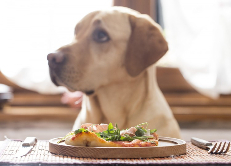 Best Premium Pet Foods
