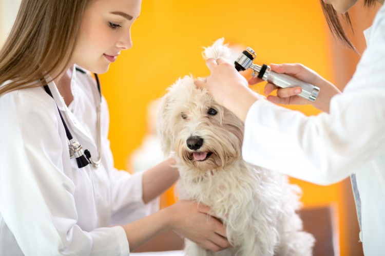 Our state-of-the-art hospital focuses on the latest technological advances  for your pet's care.