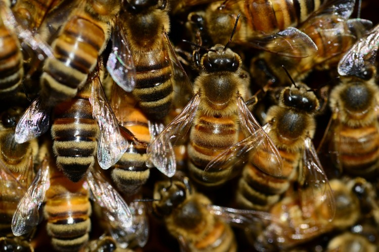 Animals That Killed The Most People in The World - Bees