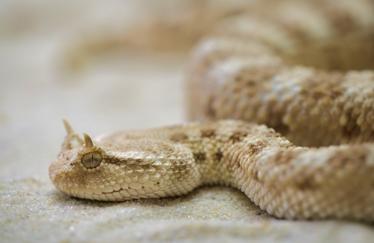 Animals That Killed The Most People in The World - Snakes