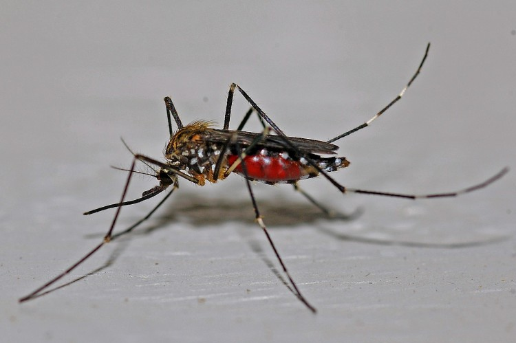 Animals That Killed The Most People in The World - Mosquitos