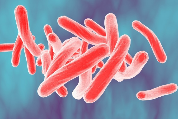mycobacterium, bacteria, bacterium, closeup, sickness, micro, sepsis, three-dimensional, life, fighting, pathology, disease, epidemic, rod-shaped, medicine, macro,