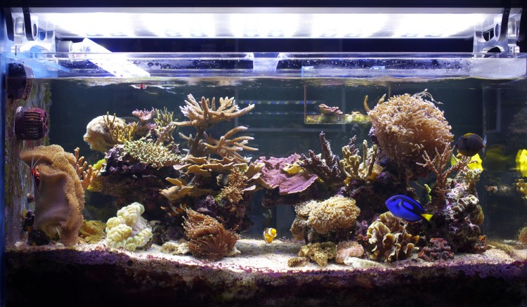 Easiest Coral Species To Grow And Maintain For Beginners