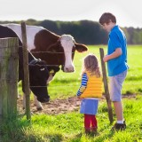 farm, fun, child, cow, outdoor, calf, family, farm, animals, nature