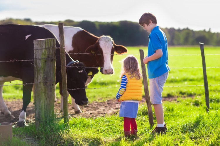 farm, fun, child, cow, outdoor, calf, family, farm, animals, nature 6 Easiest Cows To Raise With Your Children