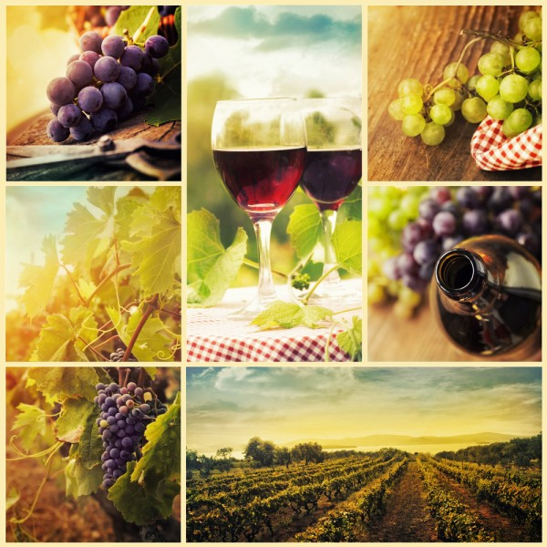 wine, grapes, vineyard, red, cellar, harvest, background, concept, barrel, white, autumn, alcohol, cork, set, food, tree, sun, vines, pouring, farm, collection, glass, wood, 7 Countries That Make the Best Wine in the World