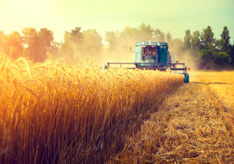 harvester, harvesting, harvest, barley, grain, tractor, field, farming, heartland, sunset, bread, rye, ripe, dust, grow, agriculture, swath, yellow, peasant, growing, ears,
