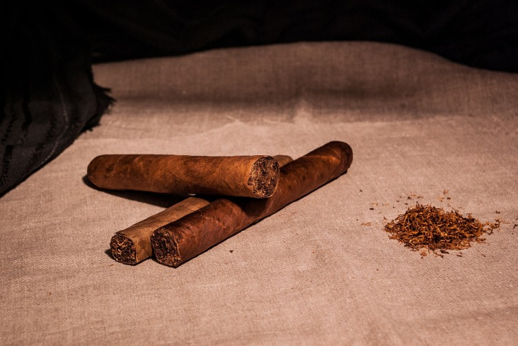 how to grow tobacco for cigars