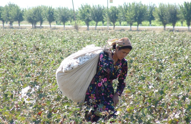 8 Countries that Produce The Most Cotton in The World