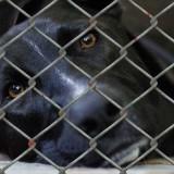 dog-509105_1280