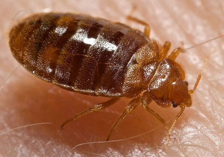 11 Worst Cities For Bedbugs in America