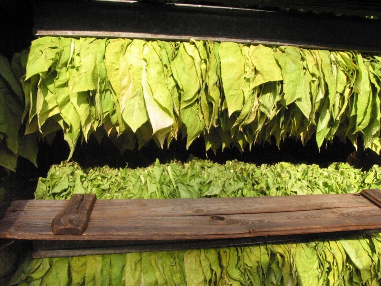 8 Countries that Produce the Most Tobacco in the World