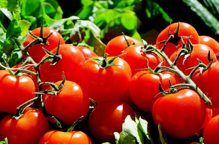 8 Countries that Produce the Most Tomatoes in the World