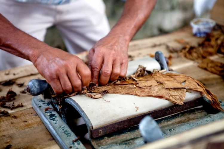 cigar, cigars, cuba, cuban, dry, handle, handling, handmade, hands, havana, leave, leaves, male, man, method, old, people, person, process, processing, roll, rolling, smoke, tobacco, work, working, wrap, wrapping