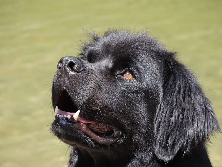 11 Best Therapy Dog Breeds For Autistic Children