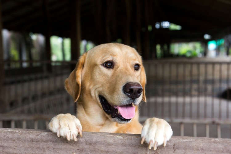 10 Best Autism Service Dogs for Adults