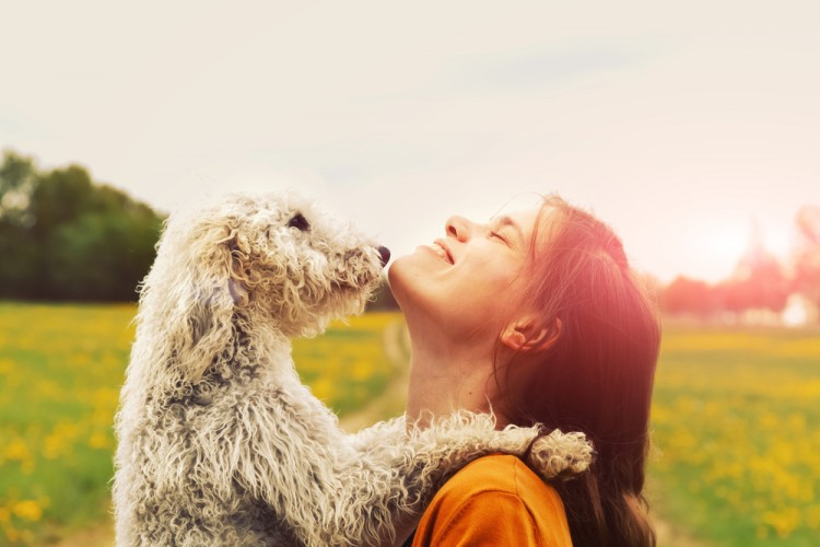 10 Therapy Dog Breeds for Depression and Anxiety