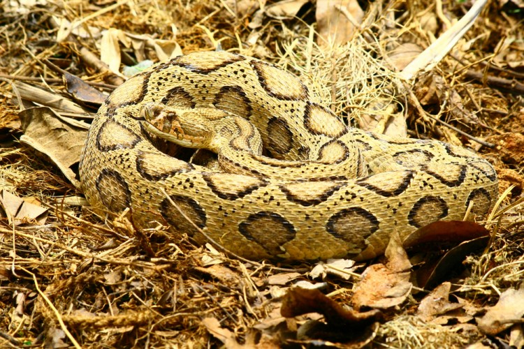20 Most Deadliest Snakes in the World