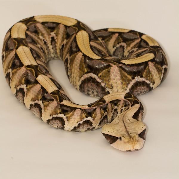 10 Best Snake Bite Antivenom Kits on Amazon and Walmart