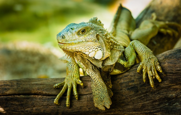 9 Most Profitable Reptiles, Pets And Farm Animals To Breed in America