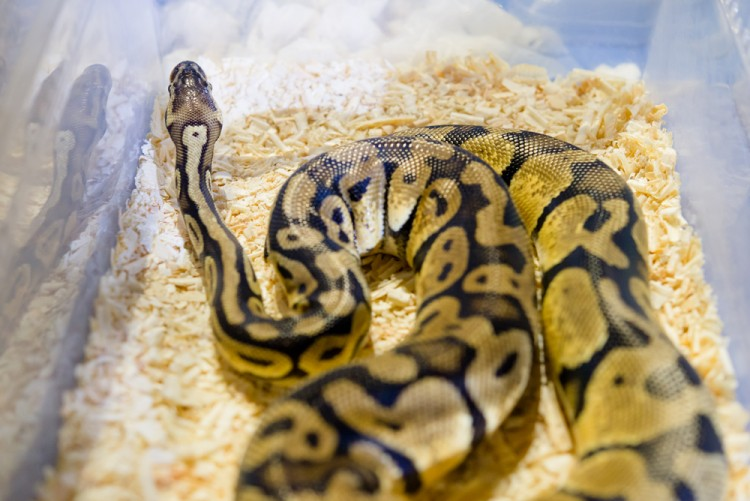 10 Snake Breeders and Reptile Shops in NJ and New York - Insider Monkey