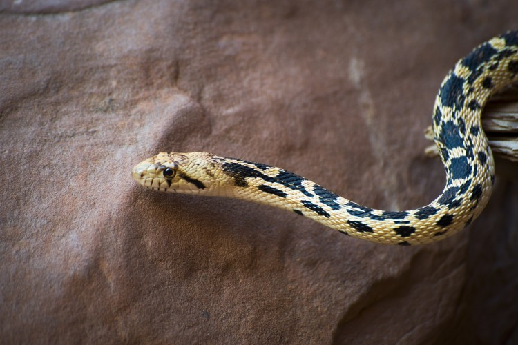 10 States With the Most Venomous Snakes in America
