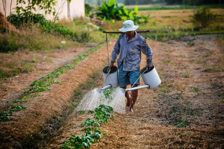 15 Best States For Agricultural Workers