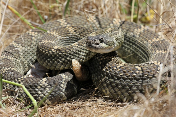 10 States With no or Least Poisonous Snakes in America